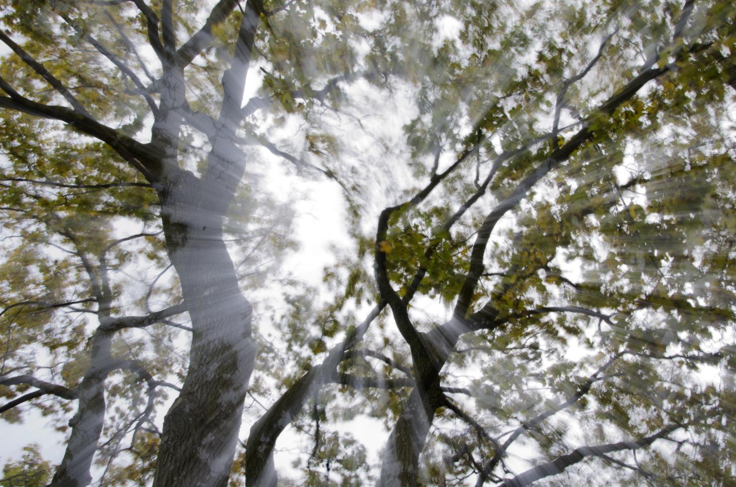 dsc_9702-trees-one