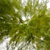 dsc_9697-trees-three