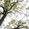 dsc_9706-trees-two