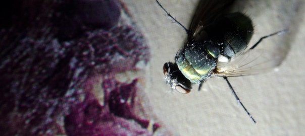 experimenting in the studio – a diptera death mask